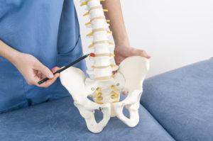 Detalhe de médico indicando vértebra em um esqueleto da coluna humana